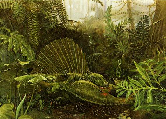 Диметродон (Dimetrodon Cope, 1878) - найбільший хижак початку пермського періоду. Джерело ілюстрації: www.emc.maricopa.edu