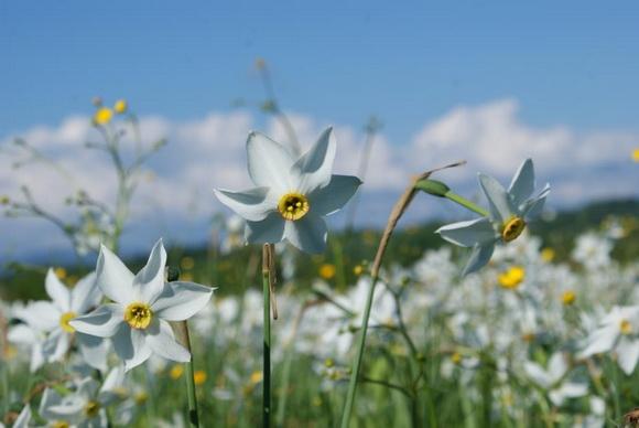 Диво квіти у карпатському біосферному