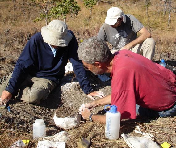 Палеонтологи К. Анґельчик, Б. Симпсон та С. Стеєр на розкопкаху південній Танзанії. Джерело ілюстрації: http://protist.biology.washington.edu