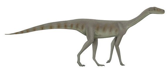 Реконстроукція Асілізавра. Джерело ілюстрації: http://www.en.wikipedia.org