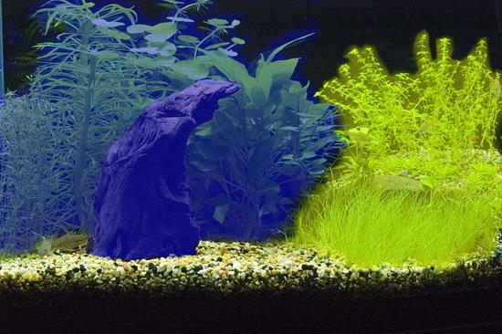 Дві незалежні композиції створені дизайнером акваріуму