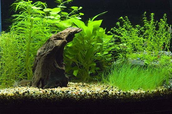 Приклад декору малого акваріуму об'ємом до 150 літрів