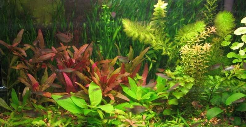 У голландському акваріумі акцент