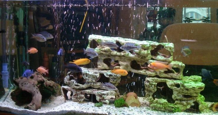 """""""Малавійський акваріум"""""""