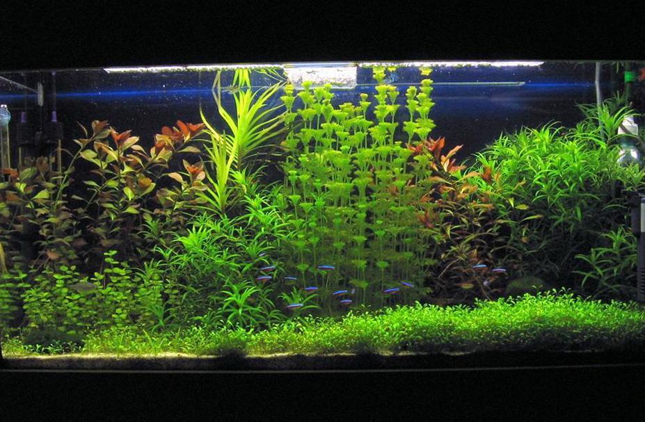 Чарівний світ акваріуму