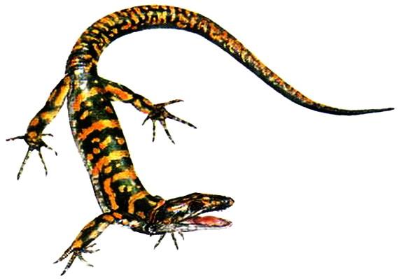 Археотирис флоридський (Archaeothyris florensis Reisz, 1972) - один із найдревніших звіроподібних ящерів