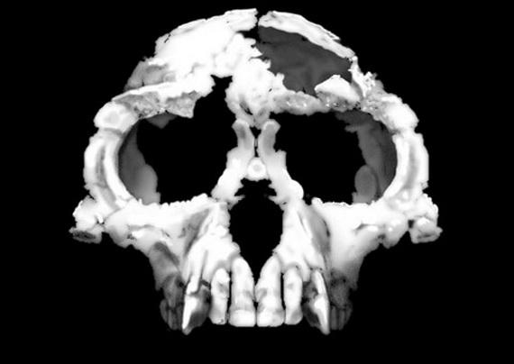 Череп Ардіпітека корінного (Ardipithecus ramidus Gibbons, 2009). Джерело: http://www.en.wikipedia.org
