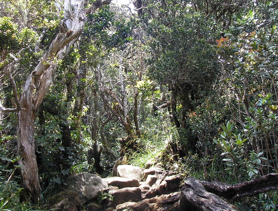 Тропічне криволісся на Борнео. Джерело: Олександр Бойко