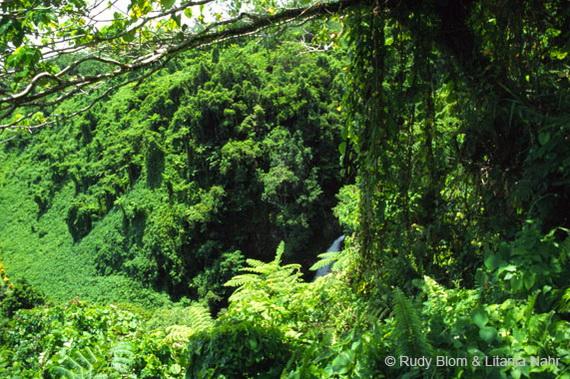Рівнинні тропічні ліси у Парку національної спадщини Боума, о.Тавенуї. Джерело: http://www.blomnahr.nl