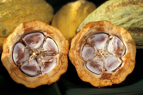 Плід і насіння какао
