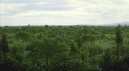 Дощові ліси кам'яновугільного періоду (360-300 млн. років тому)
