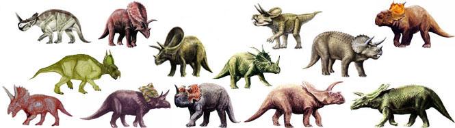 ceratopsidae_st_naturalist
