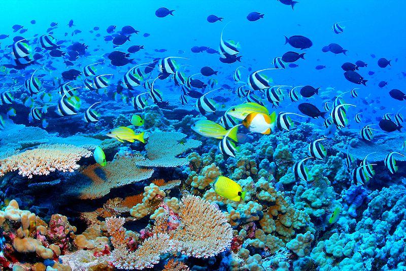 Кораловий риф - одна з найбагатших екосистем Землі