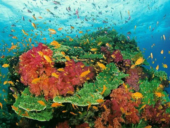 Вершина коралового рифу