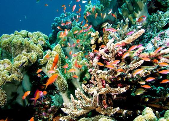 Частина коралового рифу з його мешканцями