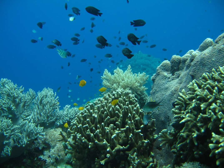 corall-reef.jpg