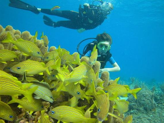 Перед морськими біологами лежить нелегке завдання обліку біологічного різноманіття найбільш продуктивної і найбагатшої екосистеми на Землі - коралового рифу