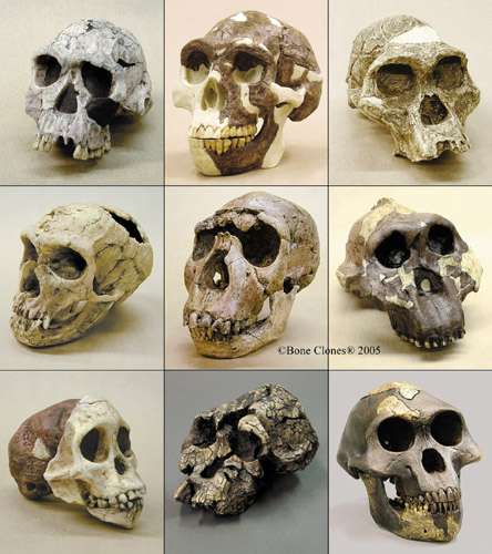 craniums_st_naturalist1