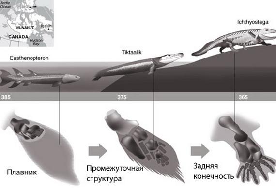 Вихід хребетних на суходіл. Джерело: http://www.cryptozoology.ru
