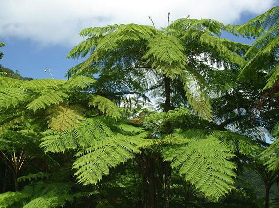 Дощові папоротеві тропічні ліси панували у центрі суперматерика Пангеї
