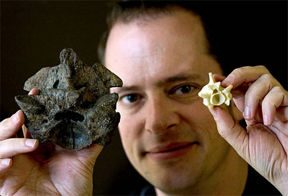 Прівняйте хребці Титанобоа церейонського (зліва) та Анаконди (справа). Джерело: http://www.dancewithshadows.com
