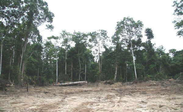 На місці тропічного лісу у долині Конґо, після вирубок, залишається лише пустеля