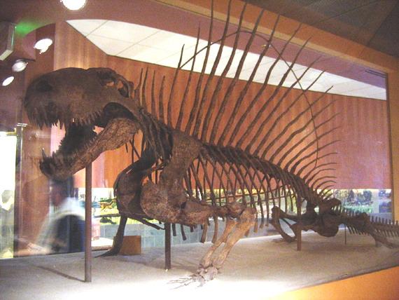 Скелет Диметродона (Dimetrodon Cope, 1880)