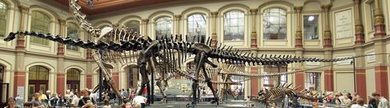 Скелети Диплодока (спереду) та Брахиозавра (позаду) в експозиції Берлінського природознавчого музею