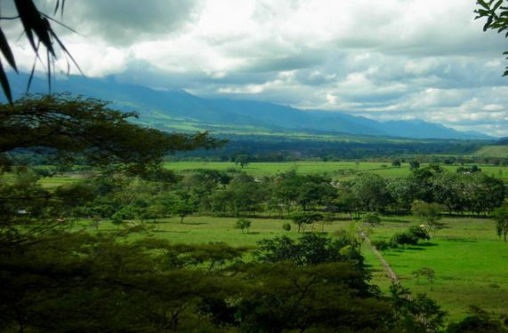 Савани-ллянос у андійських передгір'ях Колумбії. Джерело: http://www.en.wikipedia.org