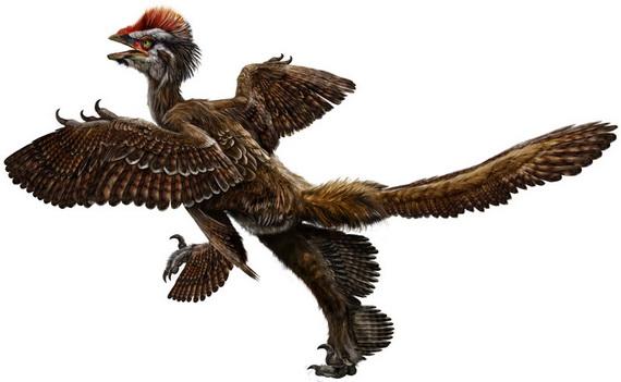 Анхіорніс Гакслі (Anchiornis huxleyi Xu, Zhao, Norell, Sullivan, Hone, Erickson, Wang, Han, et Guo, 2009). Джерело: http://www.english.ivpp.cas.cn