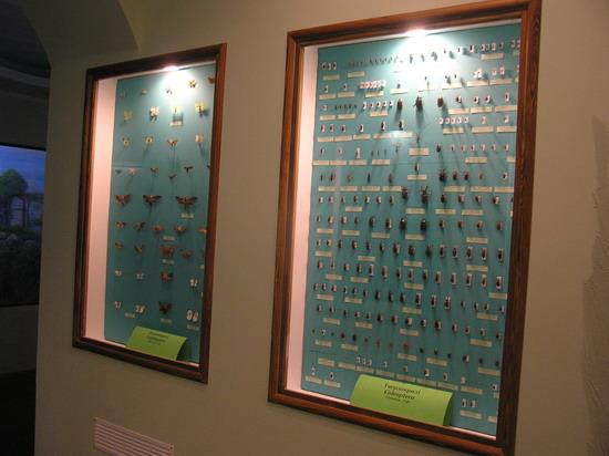 Ентомологічна галерея з колекціями жуків і метеликів