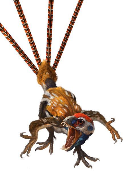 epidexipteryx-hui_st_naturalist.jpg