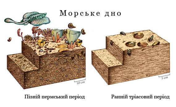 На П-Т межі вимерло 95%  усіх морських організмів. Джерело: http://www.evolution-textbook.org