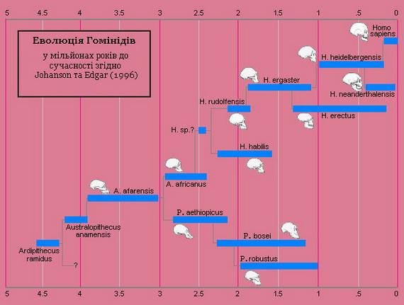 Еволюційне дерево Гомідів. Джерело: http://www.darwiniana.org.copy