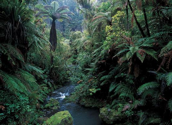 Сучасні папоротеві ліси Нової Зеландії, мабуть, найбільше схожі на ліси крейдового періоду
