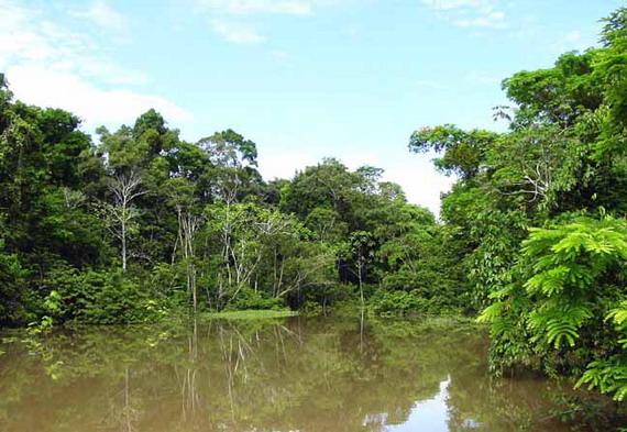 Галерейний ліс однієї з численних приток Амазонки