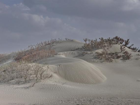 Навіть убога пустельна рослинність здатна закріпити рухомі піски, запобігаючи піщаним бурям. Джерело ілюстрації: http://www.static.anoramio.com