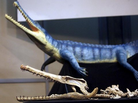 guarinisuchus-munizi_st_naturalist.jpg
