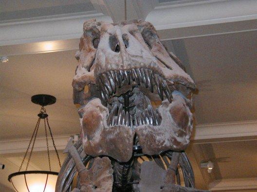 Голова Тиранозавра була розширена позаду і звужена спереду, а паща всіяна велетенськими зубами