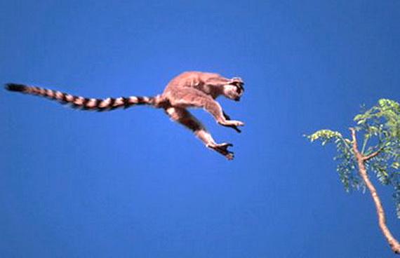 Мавпа чи лемур? Джерело ілюстрації: http://www.age-of-the-sage.org