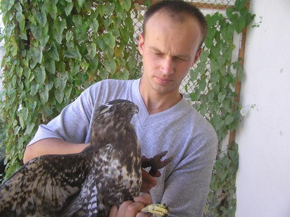 Інженер-зоолог Андрій Гембарський, перед випуском у дику природу, кільцює Канюка звичайного (Buteo buteo L.)