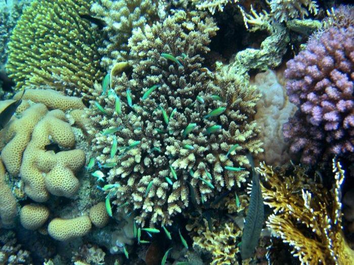 koraly.jpg