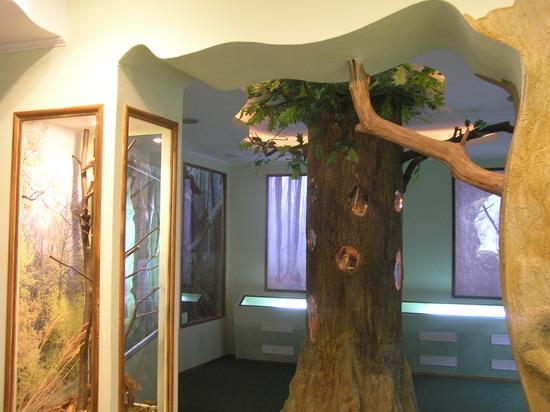 Вхід до лісової зали з її знаменитим дубом