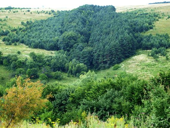 У балках і долинах опільські степи змінюються лісом
