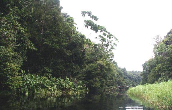 Національний Парк Лоанґо у Ґабоні