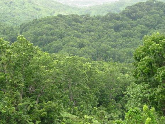 Гірські тропічні ліси. Джерело: http://www.fijimahogany.com