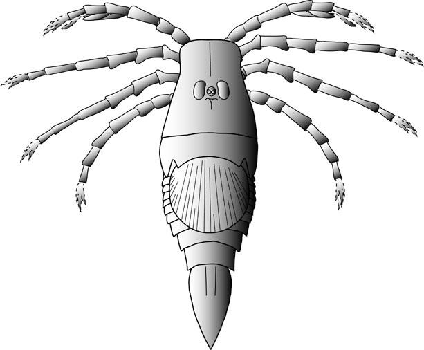 Меґарахна Сервінея (Megarachne servinei) – ракоскорпіон