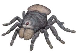 Помилкова реконструкція Меґарахни Сервінея як павука