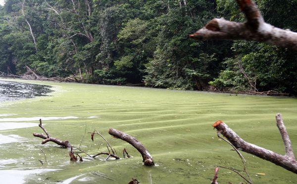 Ріка Мпіві одна із численних у басейні Конґо