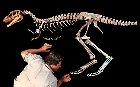 Скелет Рапторекса Креґштейна (Raptorex kriegsteini Sereno et cet, 2009) - древній Тиранозаврид був ростом із людину. Джерело: http://www.news.nationalgeographic.com